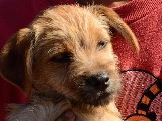 Piraquara (PR) vai oferecer castração gratuita para animais de famílias de baixa renda