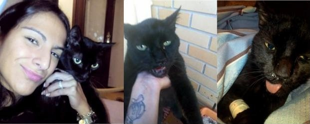 Jovem cancela casamento depois de noivo agredir gravemente a sua gata em Portugal