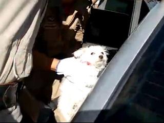 Cachorrinho é salvo após ficar trancado em carro em Volta Redonda, RJ