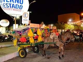 ONG lança abaixo-assinado pedindo a extinção do projeto Burro Táxi em Mossoró, RN