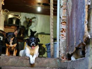 Amigos fazem campanha para ajudar 67 cães de idosa que morreu