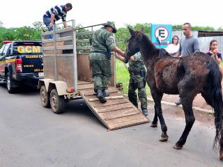 Com sinais de maus-tratos, égua é resgatada em propriedade no RS