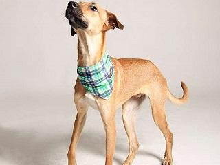 Pet shop de luxo substitui animais de raça por cachorros e gatos para adoção em Porto Alegre, RS