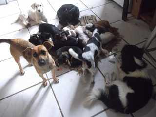 'É uma luta todo dia', diz homem que acolhe mais de 150 animais no RS