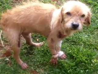 Cão é arrastado por carro por 500 metros e sobrevive no RS, diz PM