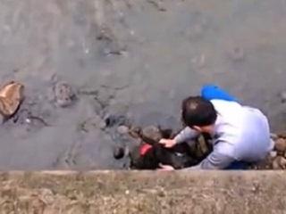 Homem encontra e resgata cão que caiu em arroio no RS