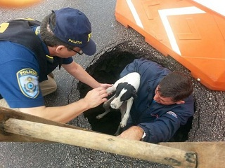 Cachorro é resgatado de dentro de cratera de bueiro na BR-101 em SC