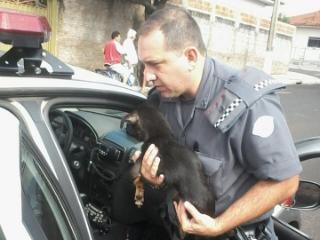 Polícia e voluntários resgatam 14 cães vítimas de maus-tratos em Cosmorama, SP