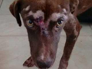 SP: Itapira ganha lei contra maus-tratos de animais