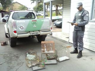 Polícia Ambiental apreende 23 aves e autua homens por crime ambiental em Pirapozinho (SP)