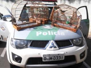 Policia Ambiental de Rio Claro apreende aves da fauna silvestre (SP)