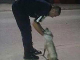 GCM resgata cachorro dentro de córrego em Taboão da Serra, SP