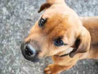 Abertas inscrições para castração de cães e gatos em Votorantim, SP