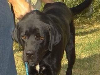SP: GM de Capivari resgata cão de casa após denúncia de maus-tratos