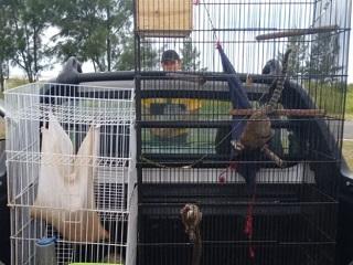 Homem é multado por manter 30 animais silvestres em cativeiro em SP