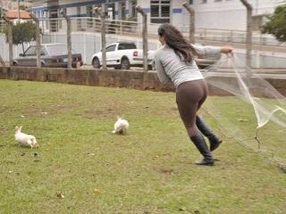 Coelhos começam a ser castrados para adoção em Limeira, SP