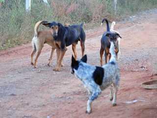 Denúncias de maus-tratos a animais somam 268 em Limeira, SP