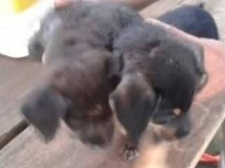 Cães são achados em sacola plástica dentro de rio de Novo Horizonte, SP