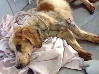 Moradora de Rio Preto (SP) é multada a R$ 3 mil por maus-tratos a cachorro