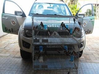 Policia Ambiental apreende 42 pássaros da fauna silvestre em Rio Claro, SP