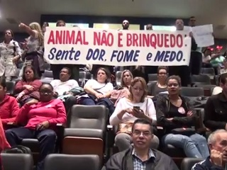 SP: Câmara de São Bernardo aprova polêmico projeto de lei sobre proteção animal