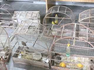 Polícia descobre sítio com 50 aves silvestres em Suzano, SP