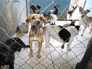 Votuporanga (SP) vai ganhar centro de Atendimento Animal