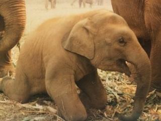 60 Elefantes são libertados após conscientização do tutor na Tailândia