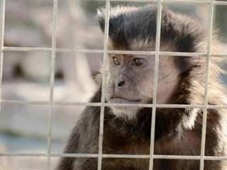 Argentina: Começou o traslado dos animais do Zoológico de Rawson