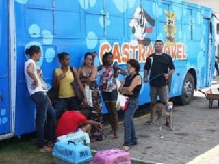 Cães e gatos podem ser castrados gratuitamente até o dia 28 de maio em Salvador, BA