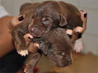 Evento coloca filhotes de cães e gatos para adoção em Boituva, SP
