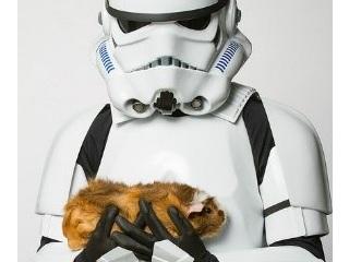ONG usa vilões de 'Star Wars' para campanha de adoção de animais; veja fotos