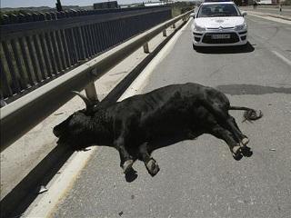 Partido Animalista exige o cancelamento das touradas programadas em Talavera de la Reina, na Espanha