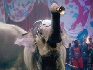 Agência federal americana acusa operador do Circo Moolah de tratar elefantes incorretamente