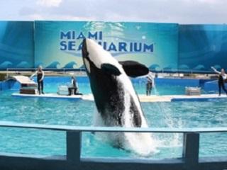 Ativistas voltam a protestar em Miami pela baleia Lolita
