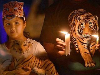 Índia: ativistas se unem contra a transferência de tigre da Reserva Ranthambore para zoológico