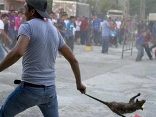 Autoridades mexicanas denunciam ritual tradicional por maus-tratos a animais