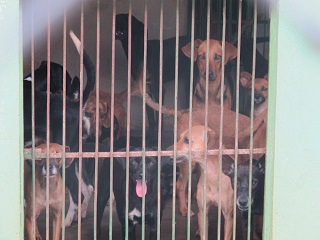 Canil Municipal de Araguari (MG) é alvo de reclamações sobre atendimento aos animais