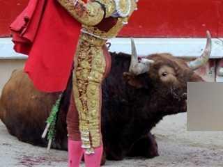 Centenas de organizações se dedicarão para proibir as touradas no mundo