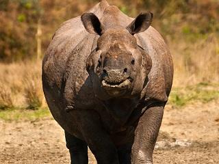 O Nepal descobriu como salvar seus rinocerontes