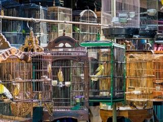 Corte de Nova Deli: Aves têm direito à liberdade e dignidade