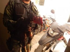 Polícia Ambiental desarticula rinha de galos em cidade do Agreste paraibano
