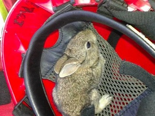 Portugal: Bombeiros salvam coelho de incêndio que dura há seis dias