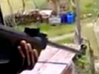 Dois jovens filmam sessão de tiros tendo gato como alvo em Portugal