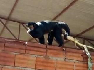 Polícia Ambiental apreende animais em Pérola D´Oeste, PR