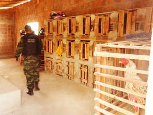 Polícia fecha rinha de galo e detém suspeito de maus-tratos na Paraíba