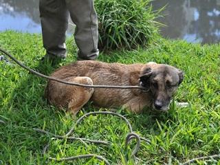 Bombeiros resgatam cão que caiu no Arroio Dilúvio, em Porto Alegre, RS