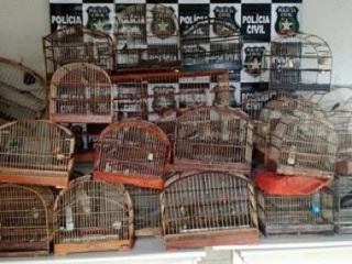 23 pássaros apreendidos são libertados em Tubarão, SC
