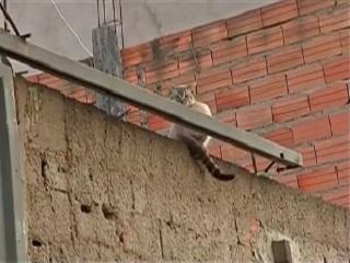 Moradores de Itaquaquecetuba (SP) denunciam envenenamento de gatos