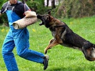Contra maus-tratos, lei deve proibir cães de guarda em São Paulo